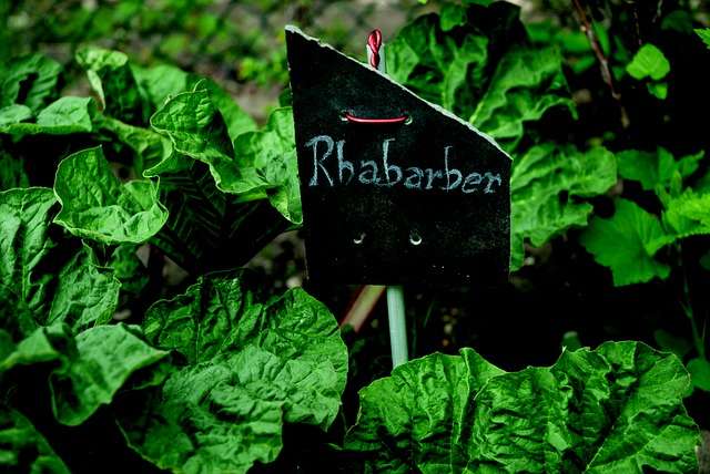 Getting To Know Rhubarb